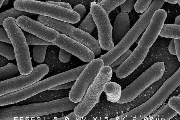 bacteriafeature