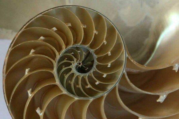 shell-jitze-flickr